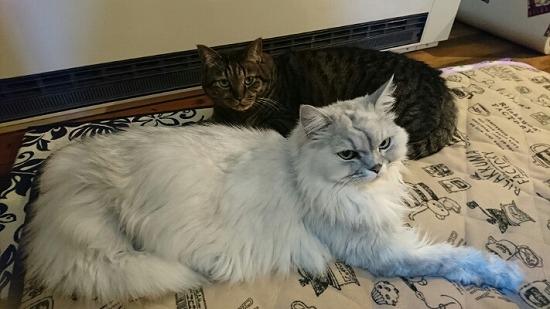 座っている先生とニセ蔵写真