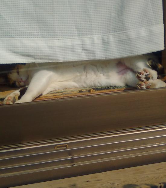 ひなたぼっこする猫の写真