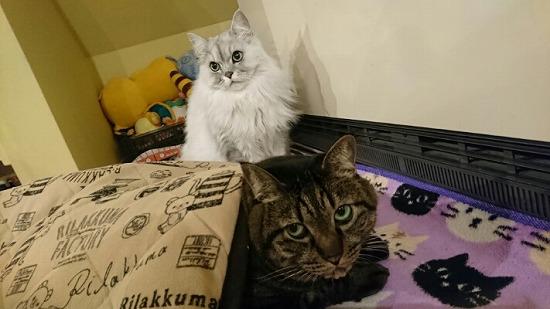 甘えるタイプではない猫写真