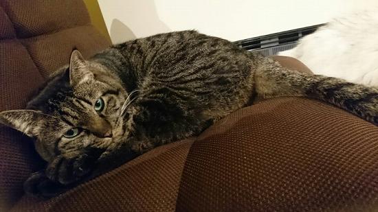 リアクションの薄い猫写真