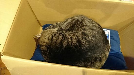 箱の中で丸まる猫の写真