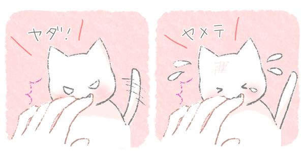 触らないでほしくて噛む猫のイラスト