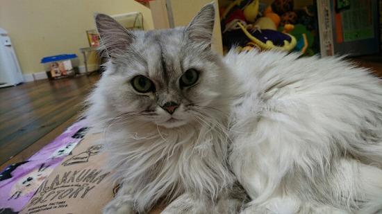猫が顔を洗う14062-4