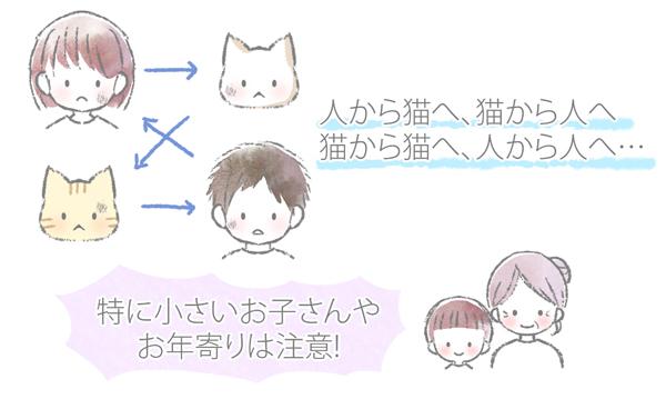 猫の真菌の感染経路のイラスト