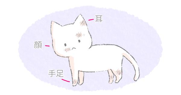 猫の真菌の症状イラスト