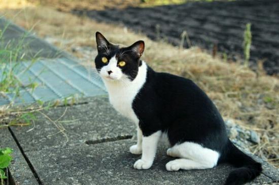 野良猫なつく13982-1
