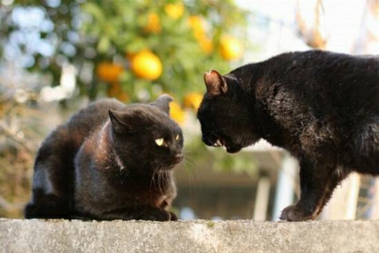 野良猫なつく13982-2