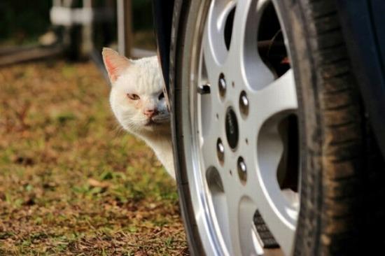 野良猫なつく13982-3