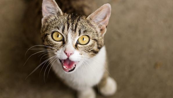 ニャー 猫 サイレント