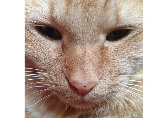 目やにがついた猫の写真