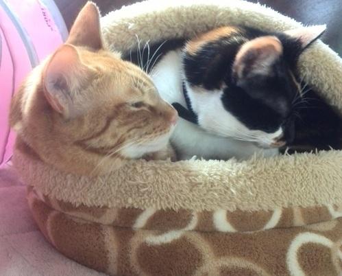 温まる2匹の猫の写真