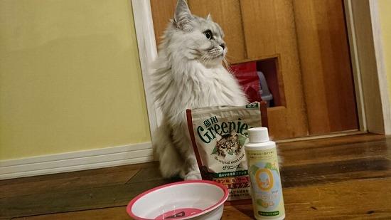 猫と口腔ケア商品の写真