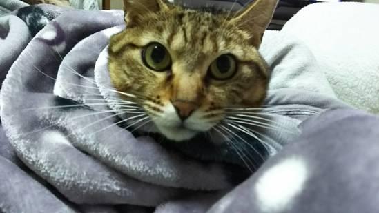 温まる猫の写真