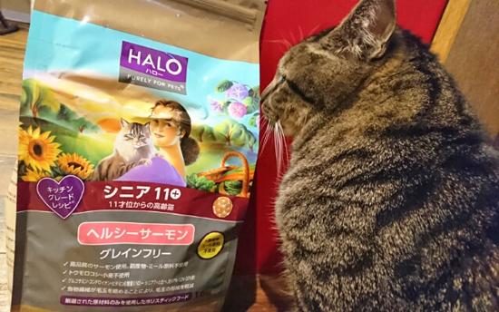 HALOキャットフードと猫の写真