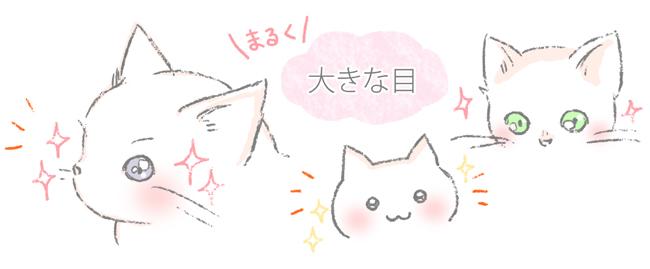 猫がかわいい理由のひとつ、目のイラスト