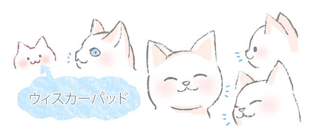 猫がかわいい理由のひとつ、ウィスカーパッドのイラスト