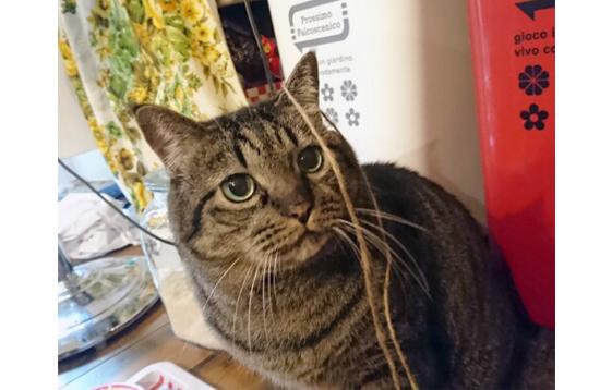 猫のニセ蔵の写真