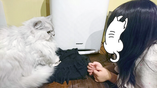 猫の先生と子供の写真