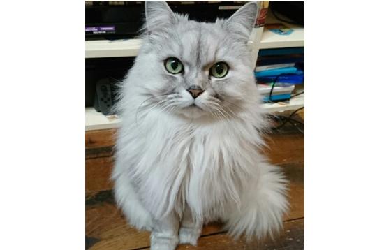 猫の先生写真