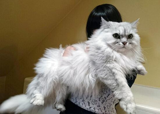 猫の先生の写真