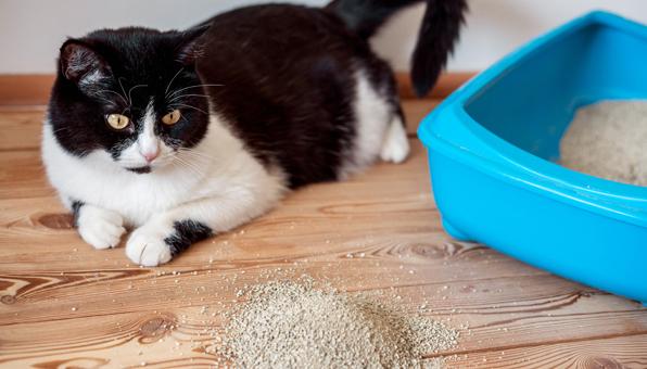 猫 砂 食べる 子猫 猫がトイレ砂を食べてしまう時の理由と対処法