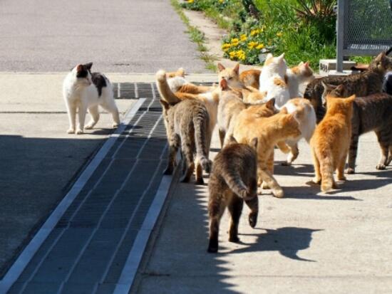 たくさんの野良猫の写真