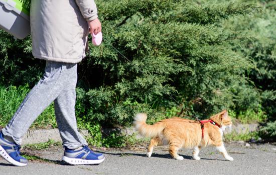 猫がハーネスをつけて散歩している写真