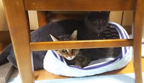 猫ルークと猫ちゃみの写真