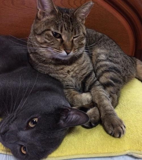 元気になった猫ルークの写真
