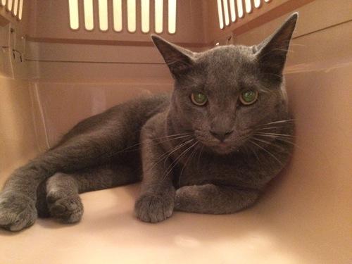 保護したばかりの猫ルークの写真