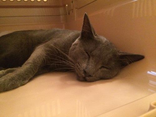 疲れた様子の猫ルークの写真