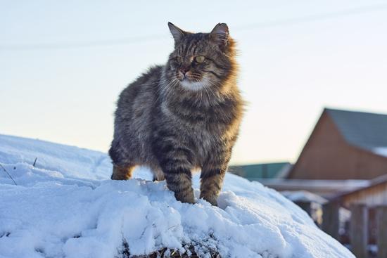 雪の地域に住む猫の写真