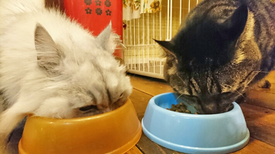 餌を食べる2匹の猫の写真