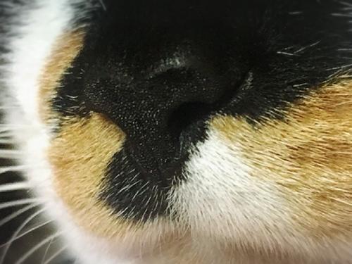 濡れている猫の鼻の写真