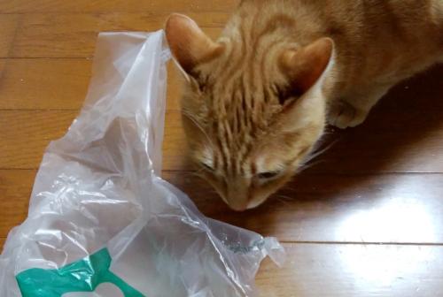 ビニール袋で遊ぶ猫の写真