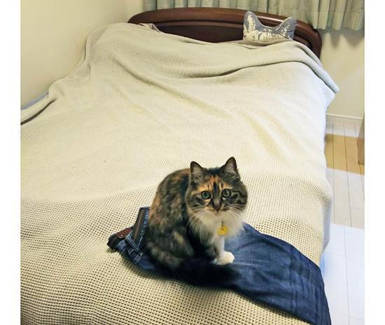ジーンズの上に座る猫の写真