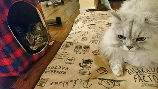 猫のニセ蔵と先生の写真