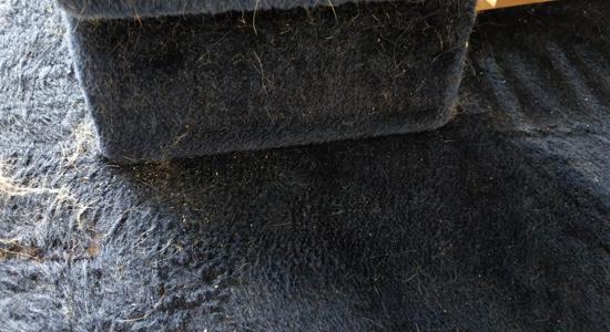 猫の毛の掃除写真6