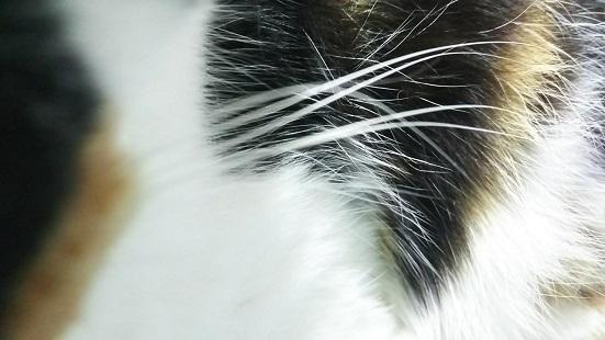猫のひげの写真