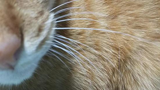 猫のひげの写真2