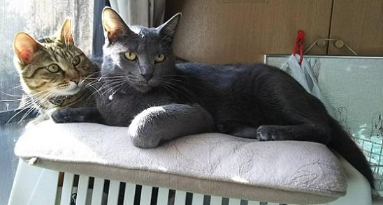 猫の写真、ちゃみとルーク