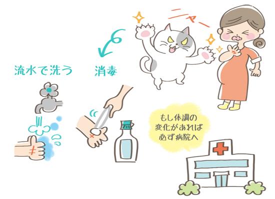 猫にひっかかれたときの対処法のイラスト