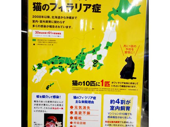 猫のフィラリアポスターの写真