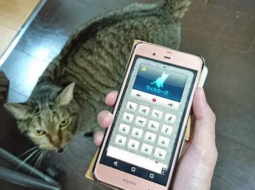 猫の鳴き声翻訳アプリ画面の写真