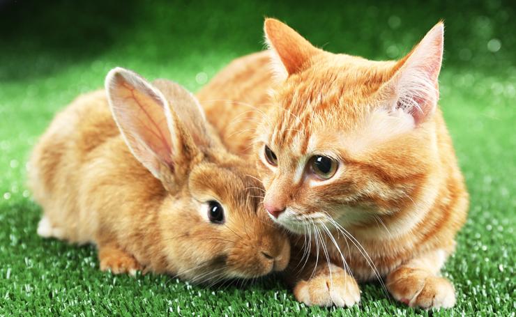 猫とうさぎを一緒に飼う。仲良くなれる組合せだけど注意点もある!