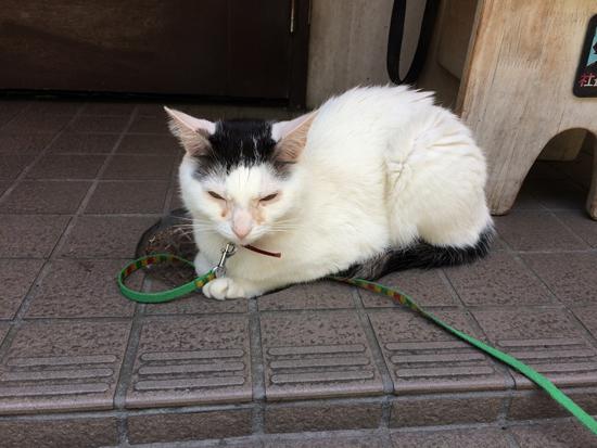 入口の足元にいる猫の写真