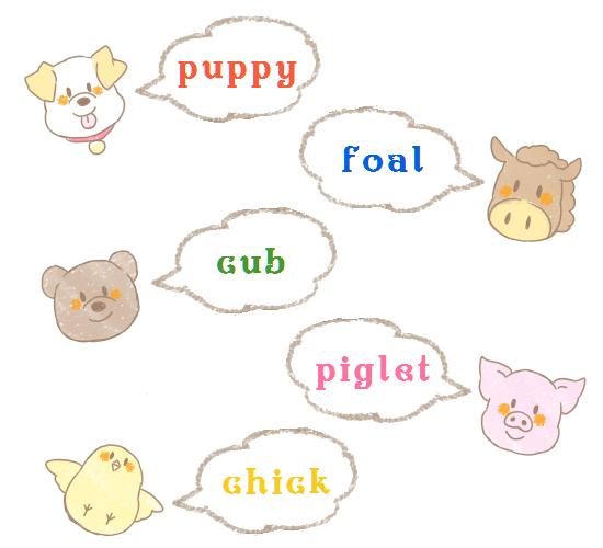 英語圏の動物の子供の呼び方