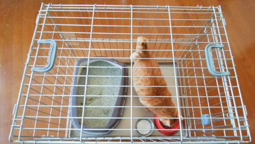 猫用ケージの写真
