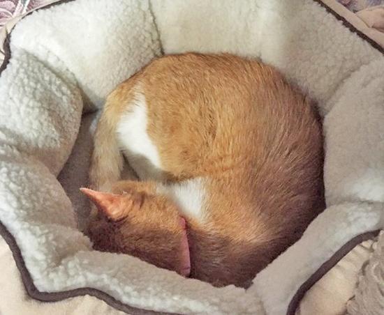丸まった猫の写真