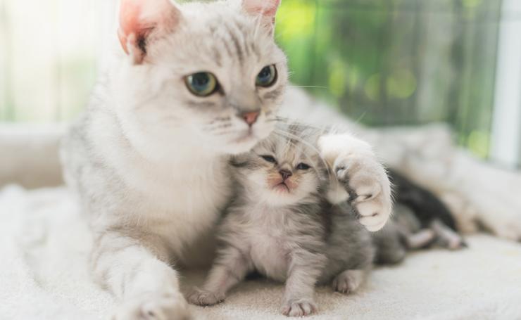 猫の癒し効果は科学で証明されて...